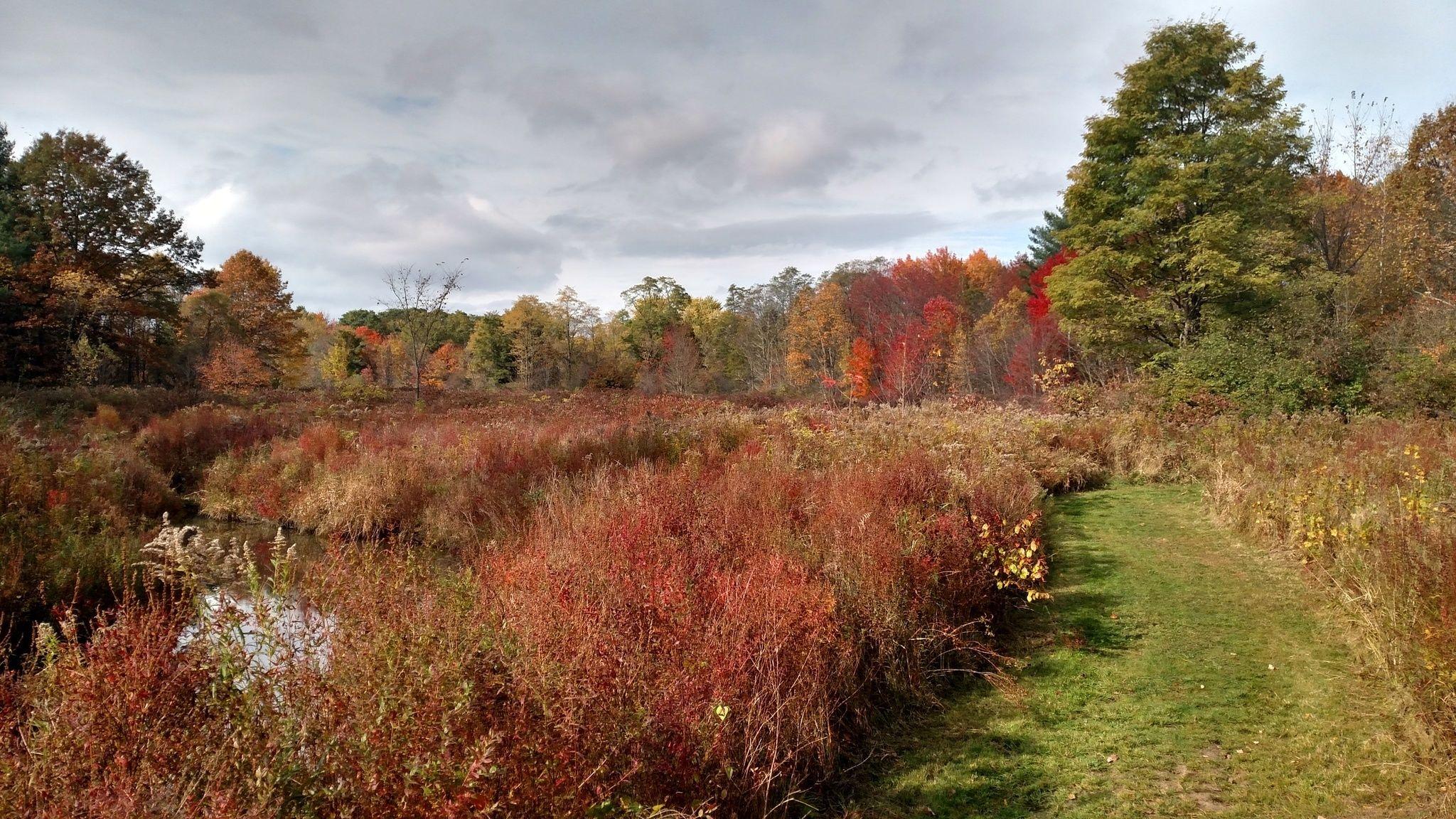 Indian Meadows